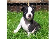 CUTE PUPPIES ,KITTEN AND BIRDS FOR FOR SALE