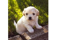 Puppy for rehoming